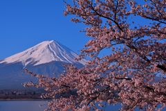Cherry blossoms and Mt. Fuji of the blue sky clear from Lake Kawaguchi Japan stock images