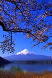 Cherry blossoms and Mt. Fuji in blue sky from Lake Kawaguchi stock image