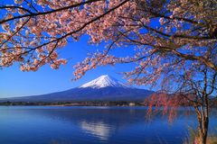 Cherry blossoms and Mt. Fuji from the Lake`Kawaguchiko` Japan Stock Images