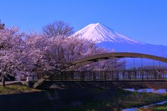 Cherry blossoms and Mt. Fuji from the northern coast of Lake Kawaguchi Japan. 04/10/2018 stock image
