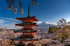 Cherry Blossoms in MT Fuji van Japan stock afbeeldingen