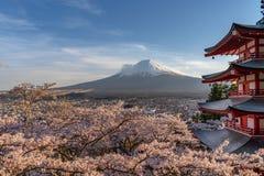 Cherry Blossoms in MT Fuji van Japan royalty-vrije stock fotografie