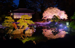 Cherry blossoms at night Royalty Free Stock Images