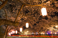 Cherry blossoms at night Stock Photography