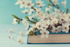 Cherry blossoms and old book on turquoise background, beautiful spring flower, vintage card. Selective focus Stock Photos