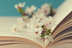 Cherry blossoms and old book on turquoise background, beautiful spring flower, vintage card. Selective focus Royalty Free Stock Photo