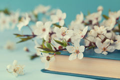 Cherry blossoms and old book on turquoise background, beautiful spring flower, vintage card Royalty Free Stock Photos