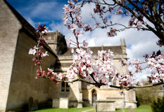 Cherry blossoms on an old chapel grounds Stock Images