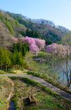Cherry blossoms in Omachi, Nagano, Japan Stock Photography