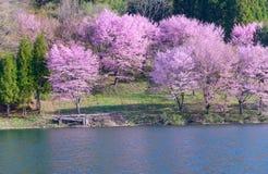 Cherry blossoms in Omachi, Nagano, Japan Stock Photo