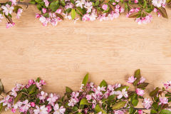 Cherry blossoms over blurred nature background Stock Image