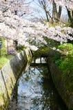 Cherry Blossoms på filosof` s går, eller Tetsugaku-inget-Michi, Kyoto Royaltyfria Bilder