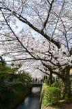 Cherry Blossoms på filosof` s går, eller Tetsugaku-inget-Michi, Kyoto Fotografering för Bildbyråer