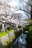 Cherry Blossoms på filosof` s går, eller Tetsugaku-inget-Michi, Kyoto, Japan Arkivfoton