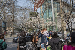 Cherry blossoms, people more than flowers. With the increase in temperature, China`s Jiangsu Nanjing chicken temple has a cherry tree in full bloom, absorbing a Royalty Free Stock Images