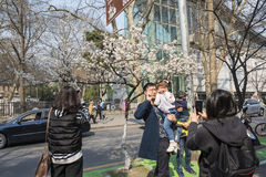 Cherry blossoms, people more than flowers Royalty Free Stock Images