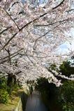 Cherry Blossoms on Philosopher`s Walk, or Tetsugaku-no-Michi, Kyoto, Japan Stock Image