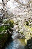 Cherry Blossoms on Philosopher`s Walk, or Tetsugaku-no-Michi, Kyoto, Japan Stock Photos