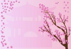 Cherry Blossoms on Pink Design. Chinese sakura or cherry blossoms on pink background vector illustration