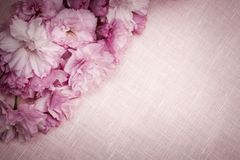Cherry blossoms on pink linen. Pink linen fabric background with cherry blossoms Royalty Free Stock Images