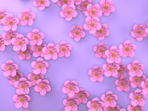 Cherry Blossoms On Purple Background Arkivbild