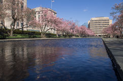 Cherry blossoms reflected in a rectangular pool stock photo