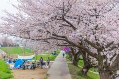 Cherry Blossoms rose photographie stock libre de droits