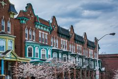 Cherry blossoms and row houses on Calvert Street in Charles Village, Baltimore, Maryland stock photography