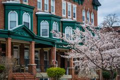Cherry blossoms and row houses on Calvert Street in Charles Village, Baltimore, Maryland stock photos