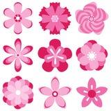 Cherry blossoms of sakura. Flat design,  illustration Stock Image