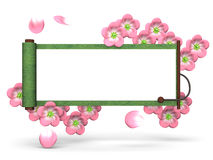 Cherry Blossoms And Scroll On White Background Royalty Free Stock Photography