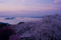 Cherry blossoms and Seto Inland Sea in the evening Stock Photos