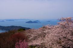 Cherry blossoms and Seto Inland Sea Royalty Free Stock Photo