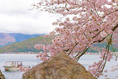 Cherry Blossoms in Shiga, Japan Lizenzfreies Stockfoto