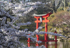 Cherry Blossoms and Shinto Shrine Royalty Free Stock Photography