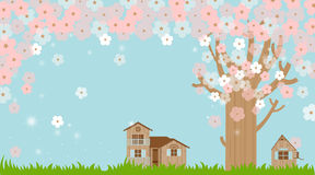 Cherry blossoms in spring C Stock Image