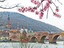 Cherry blossoms in spring in Heidelberg, Germany Royalty Free Stock Photography