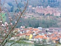 Cherry blossoms in spring in Heidelberg, Germany Stock Image
