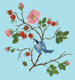 Bird on a branch of wild rose, illustration by paints royalty free illustration