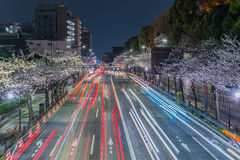 Cherry blossoms street at night Royalty Free Stock Photo
