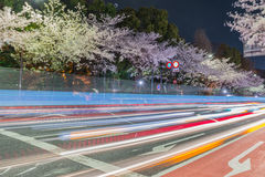 Cherry blossoms street at night Royalty Free Stock Photos