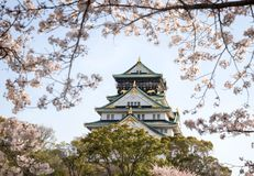 Osaka Castle in spring with cherry blossoms in full bloom royalty free stock photo