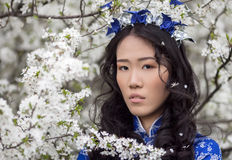 Cherry blossoms - Tender Asian girl in Ao Dai Royalty Free Stock Photos