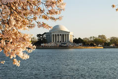 Cherry Blossoms at the Tidal Basin Stock Image