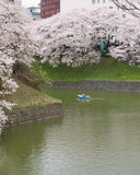 Cherry Blossoms in Tokyo Stock Photo