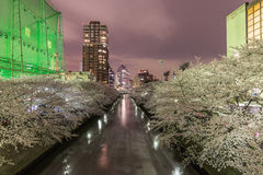 Cherry blossoms in Tokyo, Japan. Nightscape view of Cherry blossoms in Tokyo, Japan Stock Photos