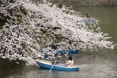Cherry Blossoms in Tokyo stock image