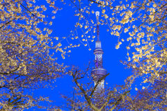 Cherry blossoms and the Tokyo Skytree in Tokyo at dusk Royalty Free Stock Images