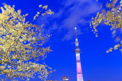 Cherry blossoms and the Tokyo Skytree in Tokyo at dusk Stock Image