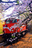Cherry blossoms & train Stock Images